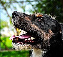 Linus Portrait by SamTheCowdog