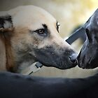 Nose to nose by ChePhotography