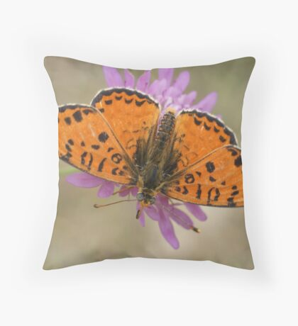 Male Spotted Fritillary Throw Pillow