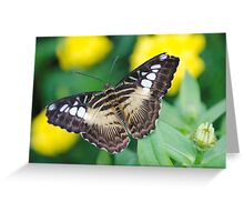 All of a flutter Greeting Card