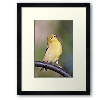 A Proud Goldfinch Framed Print