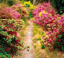 Footpath with azaleas by Gaspar Avila