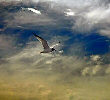 Flight of the Seagull by Paul Gitto