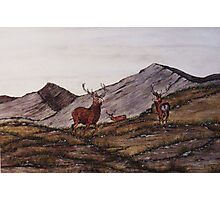 `Cabrach Stags' Red Deer in Scotland Photographic Print