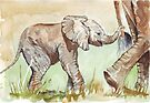 Baby Elephant walk by Maree Clarkson