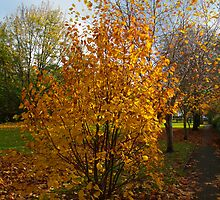 Yellow tree by josephsgallery