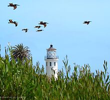 Pelicans and the Lighthouse 3 by David Denny