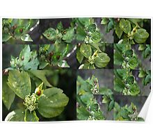 DIFFERANT LADYBIRD'S COLLAGE Poster