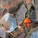 Shards and Needles by Lynda Lehmann