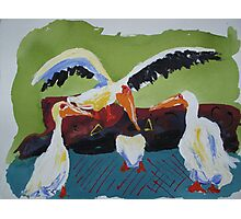 Playful Storks Photographic Print