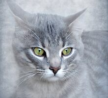 Rain (Feline portrait) by Olga