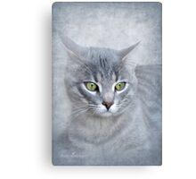Rain (Feline portrait) Canvas Print