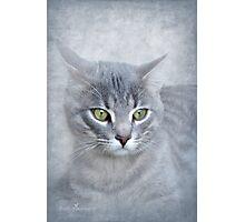 Rain (Feline portrait) Photographic Print