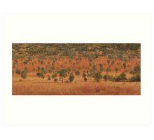Queensland Bush Art Print