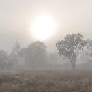 Queensland Bush Sunrise by Dean Bailey