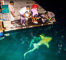 Black tip reef shark feeding in the Maldives by Atanas Bozhikov NASKO