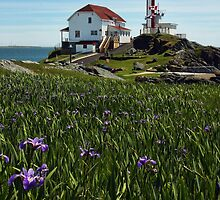 Cape Forchu Lighthouse and Irises II by Debbie  Roberts