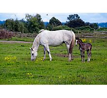 Holly & Foal Photographic Print