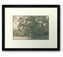 Meadow in late spring Framed Print