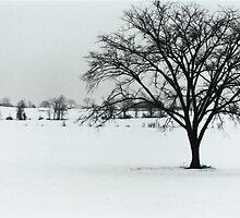 Winter Farmland 2010 by Ken Hill