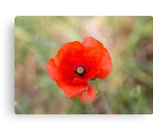 Poppy Flower Canvas Print