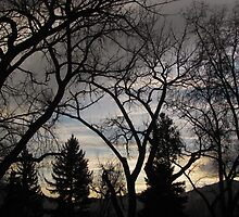 """""""The Secret Life of Trees"""" by dfrahm"""