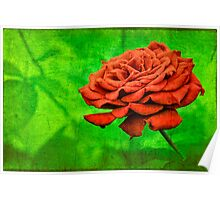 Red Rose in a Garden Poster