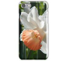 Two-tone Daffodils iPhone Case/Skin
