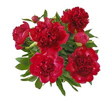 Red peony bouquet by Sunfe