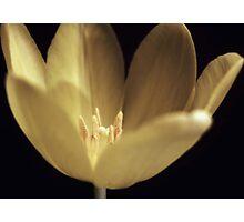 Luminosity Photographic Print