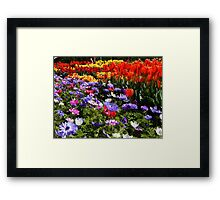 Tulip and Anemone Fields Framed Print