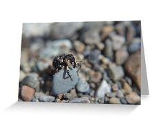 Poplar/Willow Borer Weevil Greeting Card