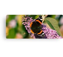 Wet Lands, Red Admiral - A View  Canvas Print