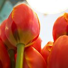 Tulips by Rebecca Staffin
