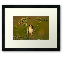 A little bird (Acrocephalus schoenobaenus) Framed Print