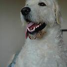 Bailey dog by David Ford Honeybeez photo