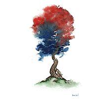 Little Zen Tree 290 Photographic Print