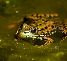 Leopard Frog by Michael Cummings