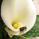 Beetle on Lily - Mars Hill, North Carolina by Glenn Cecero