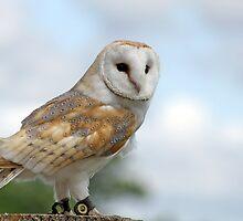 beautiful owl  by liza scott