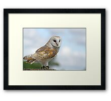 beautiful owl  Framed Print