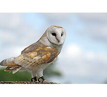 beautiful owl  Photographic Print