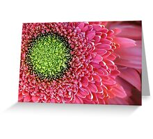 Pink Splendour Greeting Card
