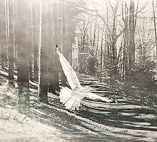White Bird on path by Diane  Kramer