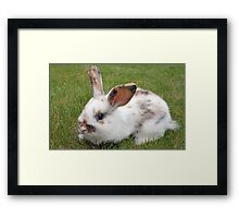 sweet baby rabbit Framed Print