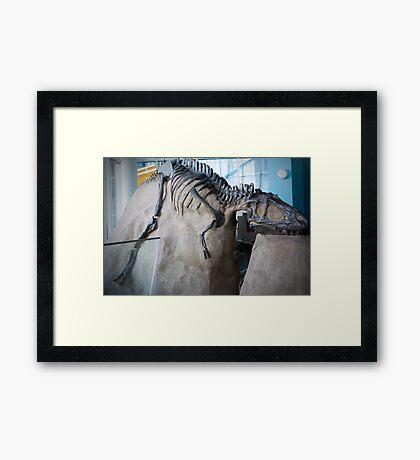 Cool Albertosaurus Framed Print