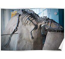 Cool Albertosaurus Poster