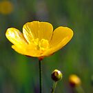 Yellow in the Field by William Martin