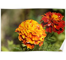 French Marigolds Poster