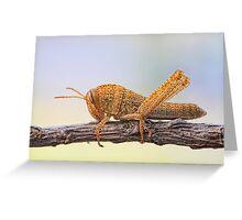 Chorthippus parallelus Greeting Card